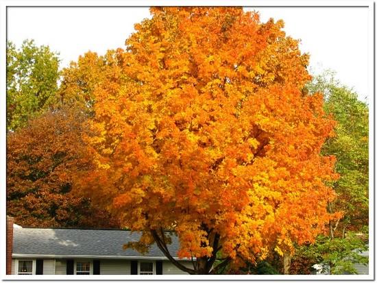 fall foliage 017.JPG