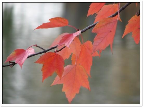 fall foliage 038.JPG