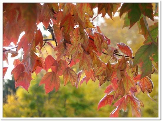 fall foliage 051.JPG
