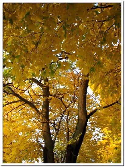 fall foliage 077.JPG