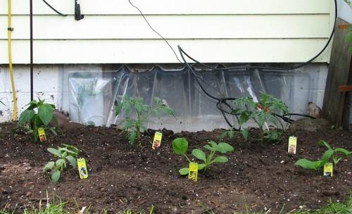 2010 Vegetable Garden.JPG