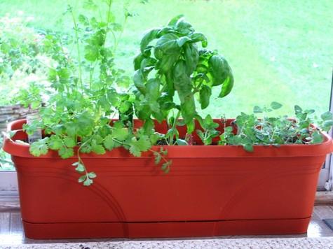 herb garden 002.JPG