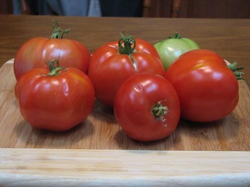Tomatoes 01.JPG